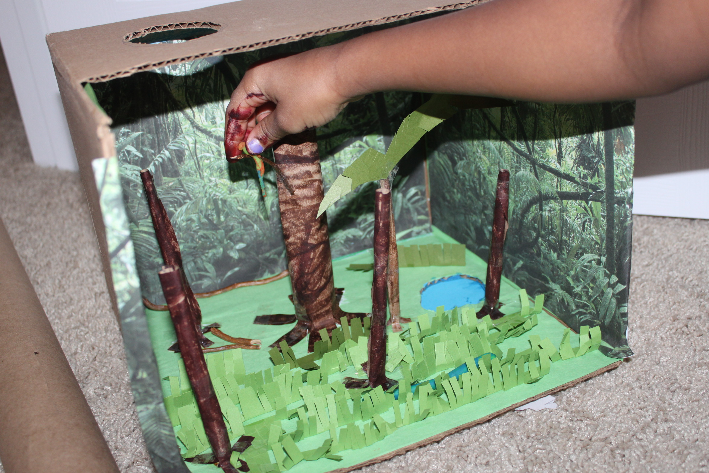 our rainforest diorama seasons of pink